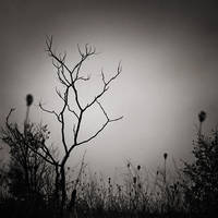 Lost Tree by SevimDalan