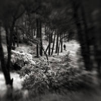 lost in forest by SevimDalan
