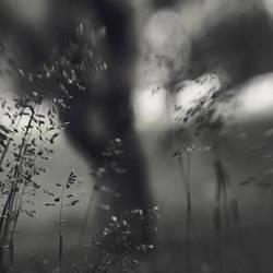 a windy day by SevimDalan