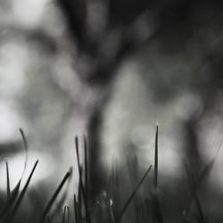 sweet dreams by SevimDalan