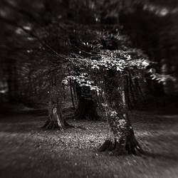 trees of the darkness by SevimDalan