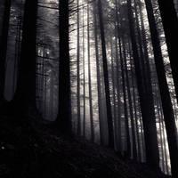 the light between them by SevimDalan