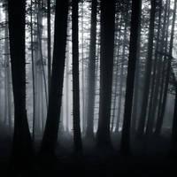 behind the dark by SevimDalan