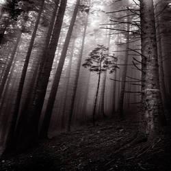 inside silence by SevimDalan