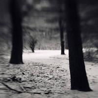white way by SevimDalan