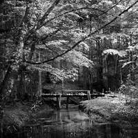 bridge by SevimDalan