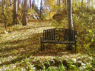 random bench in the woods by MadameMustachio