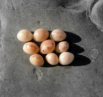 nine cowries shells by faather