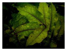 Leaves by latebraking