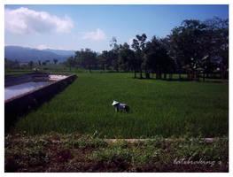 Menanam Padi by latebraking