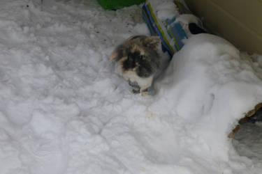 Kikki in the snow by Usagi-Zakura