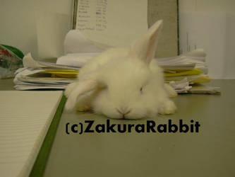 Baby bunny by Usagi-Zakura