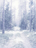 Snowy dreams forest stock by SilaynneStock