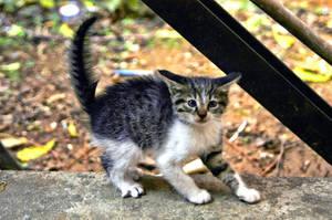 kitten by freatmah