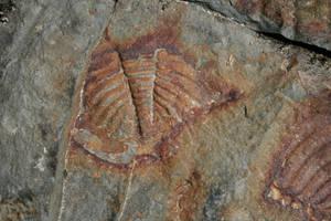 fossils by shefeldio29