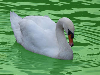 Irish Duck by roguemarielebeau