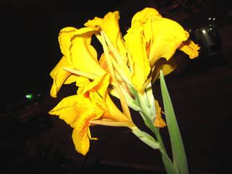 yellow flower by kitzahphrenic