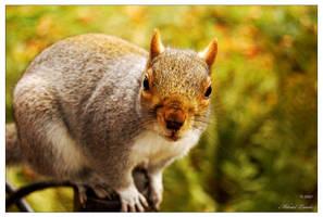 Squirrel -01- by Manveru
