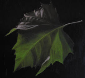 Sycamore Leaf by peterswiftart