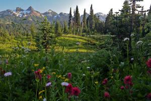 Wild flowers in Rainier Park by arnaudperret