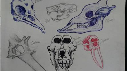 Animal Skulls by xx-StarrySkies-xx