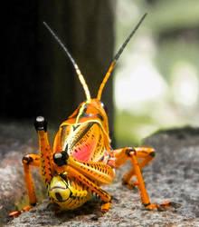 Grasshopper by anteaterjeter