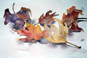 leaves by sunaysenturk