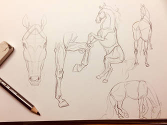 Horse poses by Phynex113