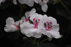 white by Pendragon-007