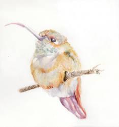 Hummingbird by salakuljettaja