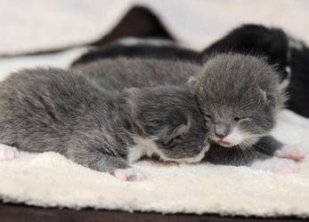 my mums cats hade kittens by ask-iggy1