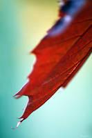 mellow leaf by Lunox-baik