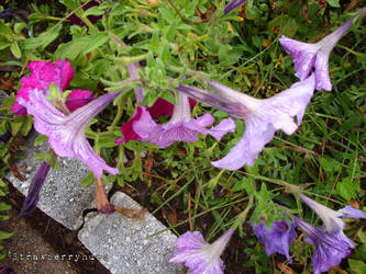 Purple Bell by sailortina