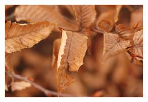 Autumn Gold by tom2strobl