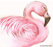 Flamingo by Emryswolf