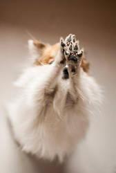 Little paws by Zirael91