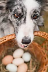 Dog for eggs by Zirael91