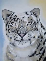 snow leopard by shizuka10