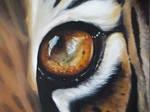 oeil du tigre by shizuka10