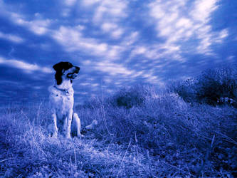 Zack - Blue Infrared by MichelLalonde