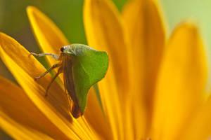 Bug  no.1 by MichelLalonde