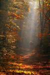 Run to the light by MichelLalonde