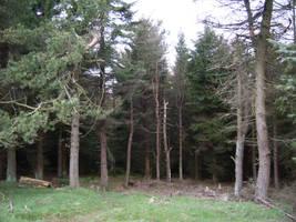 Treescape by Isavarg