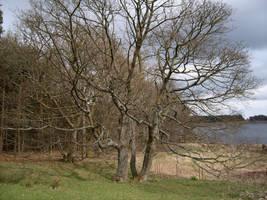 Waterside Tree by Isavarg