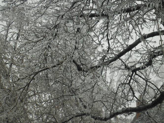 Icy tree by DragonFly188