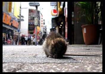 Shibuya Rat by samudaya