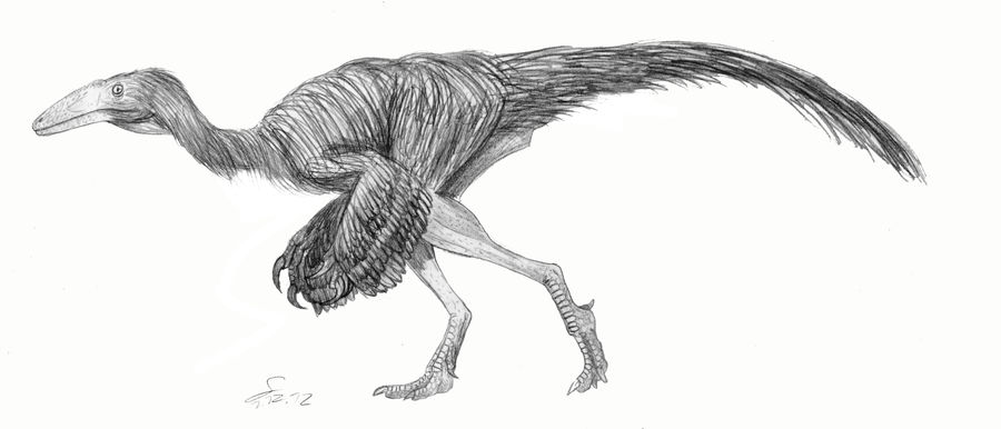 Nqwebasaurus thwazi ( a basal ornithomimid) by ShinRedDear