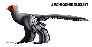 Anchiornis huxleyi V2 colored (Updated) by ShinRedDear