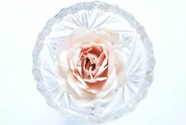 Rose coloured glass by hawkeye1