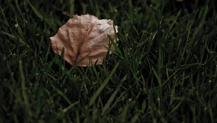 Just a leaf by hawkeye1